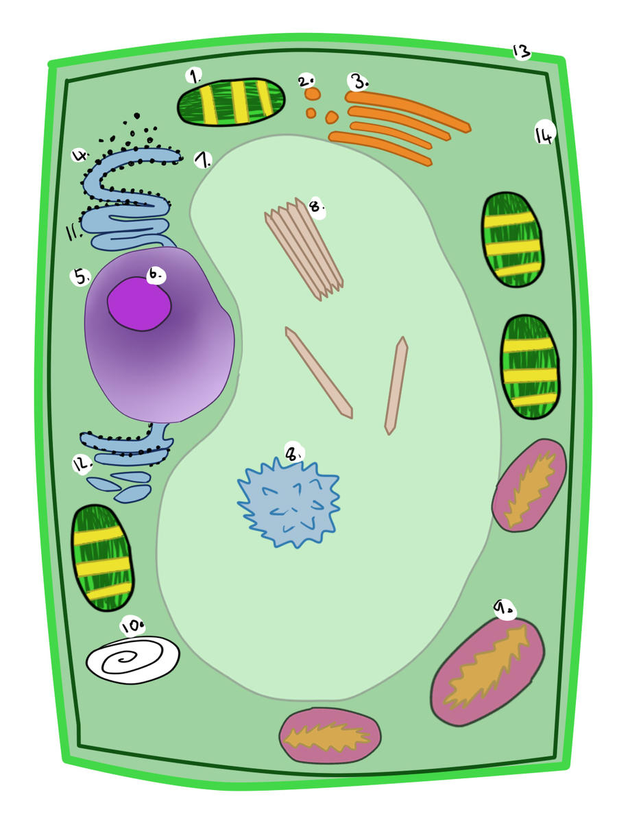 Plant Cell (W.I.P) by Kyarii-chan on DeviantArt