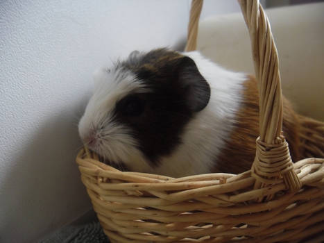 Baby Skittles in a Basket...