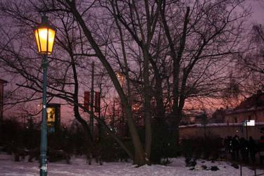 Purple at sunset