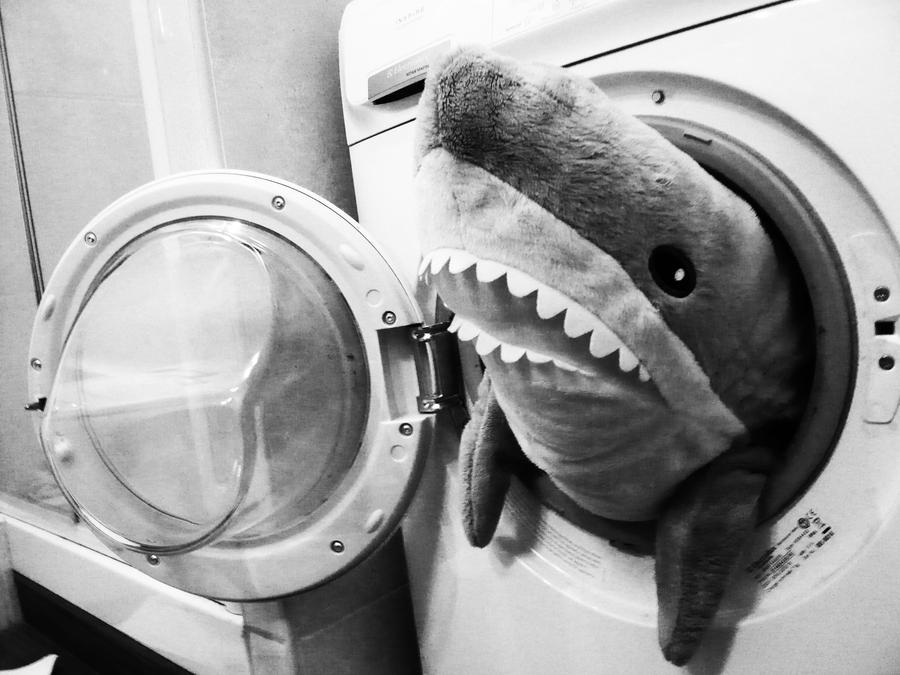 Shark in the washing machine..