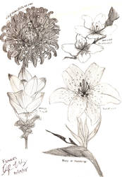 Drawing Study : Flowers by Herahkti