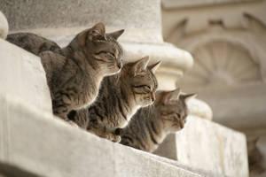 Cats by johnnymnemonic84