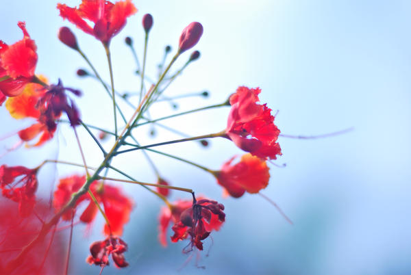 Sophisticated flower