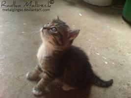 cutie by MeTaLGiNGeR