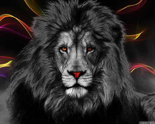 Lion in color
