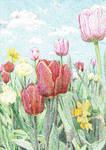 Tulips at Versailles