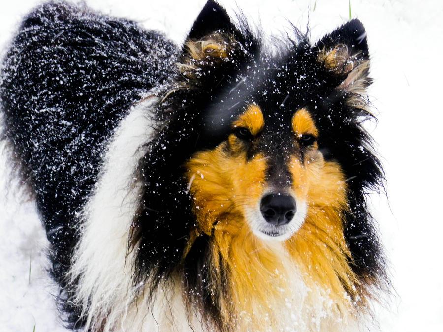 snow lady by hermio