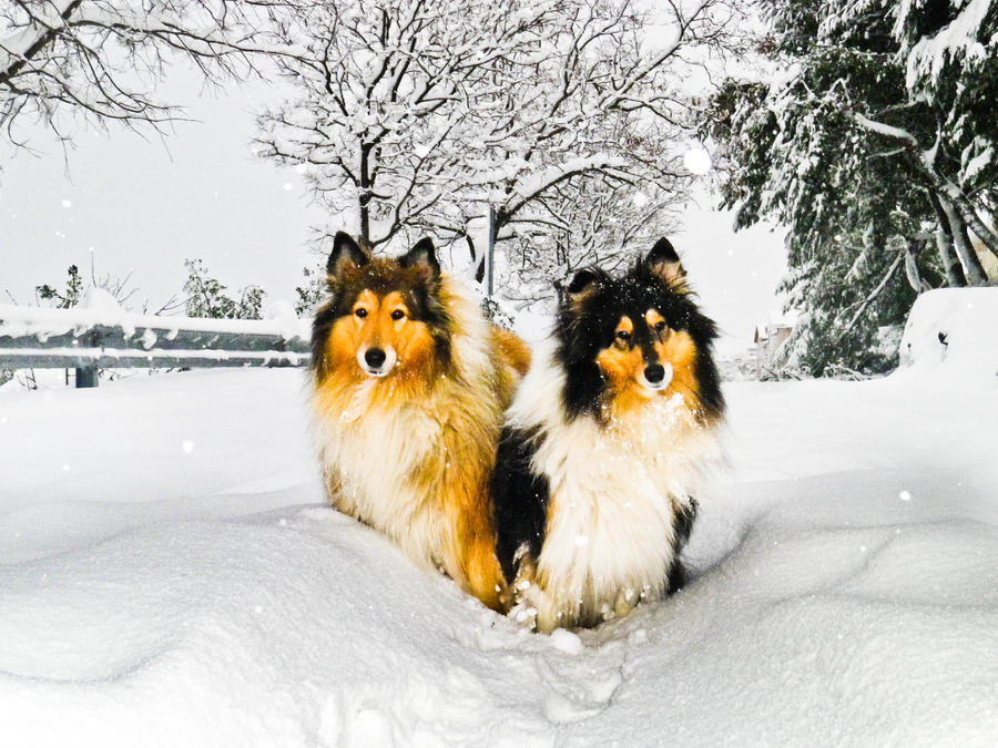 snowed in by hermio