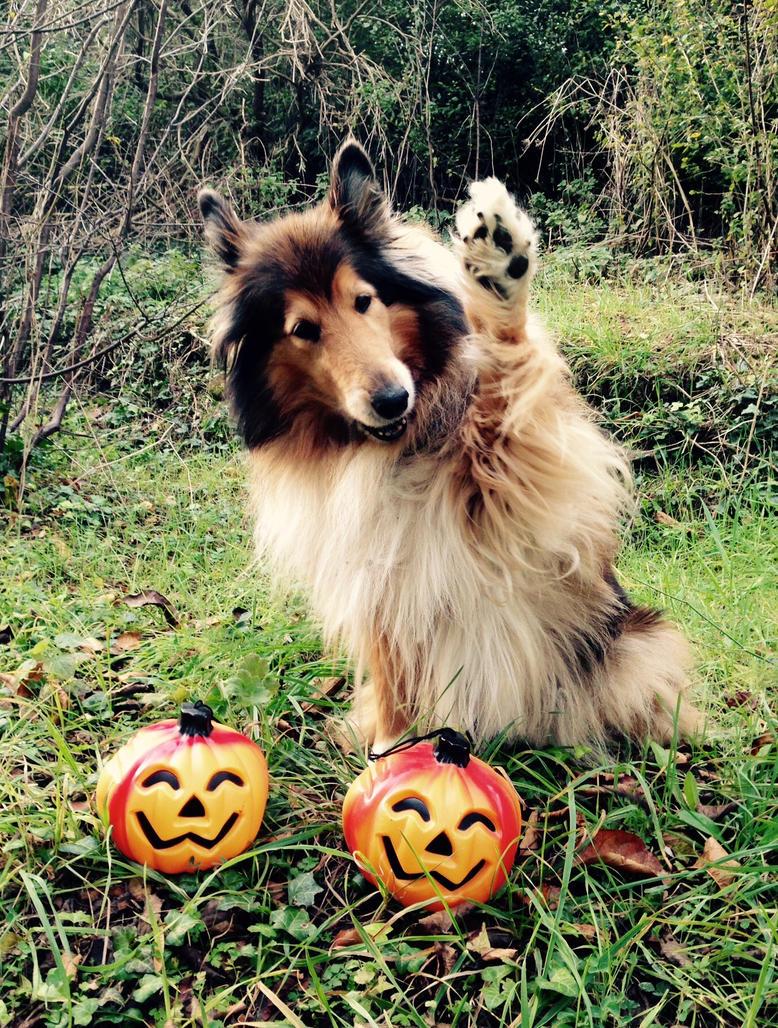 Happy Halloween Lassie! by hermio