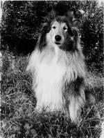 Just Lassie by hermio