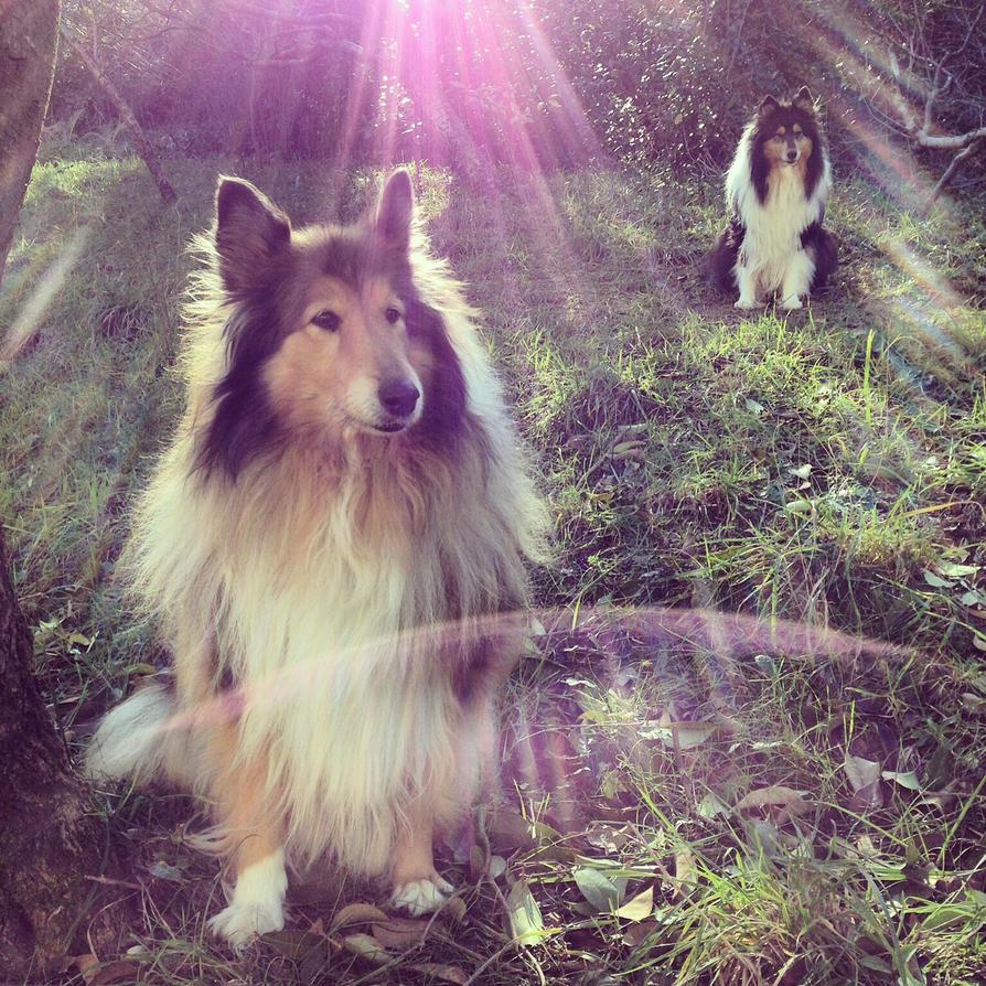 Sunny Side by hermio