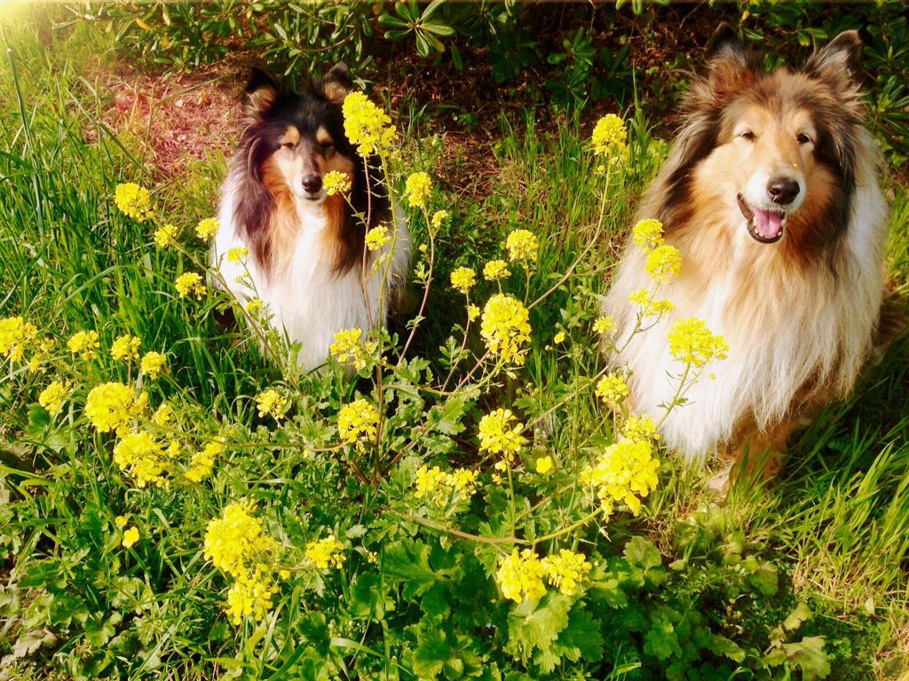 Spring Smiles by hermio