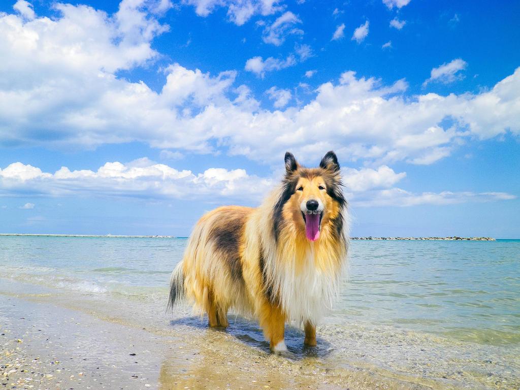 Hey Beach by hermio