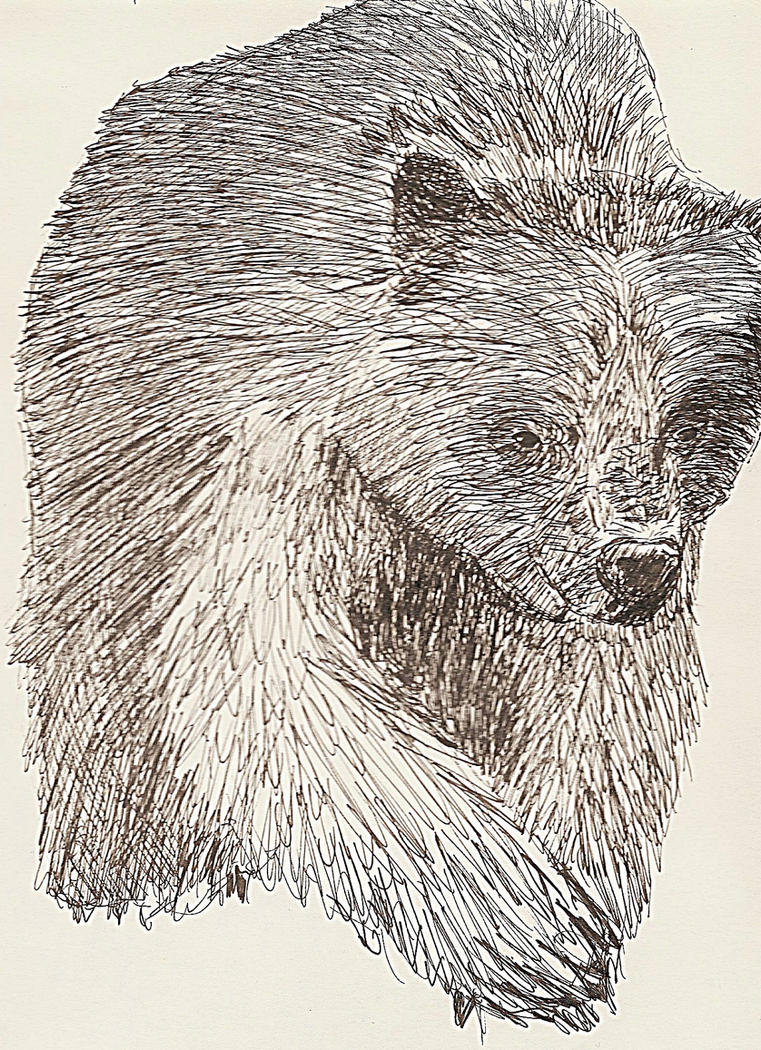 Bear by Karsmera