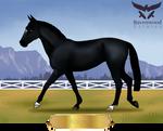 RE Knight - Thoroughbred Gelding