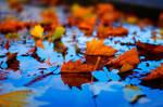 colors of a season