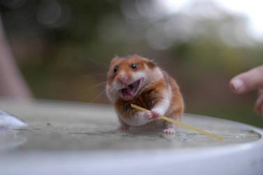 Ninja Hamster - reloaded by Ganayan