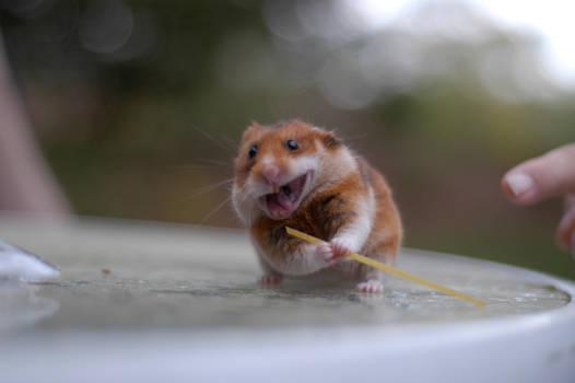 Ninja Hamster - reloaded