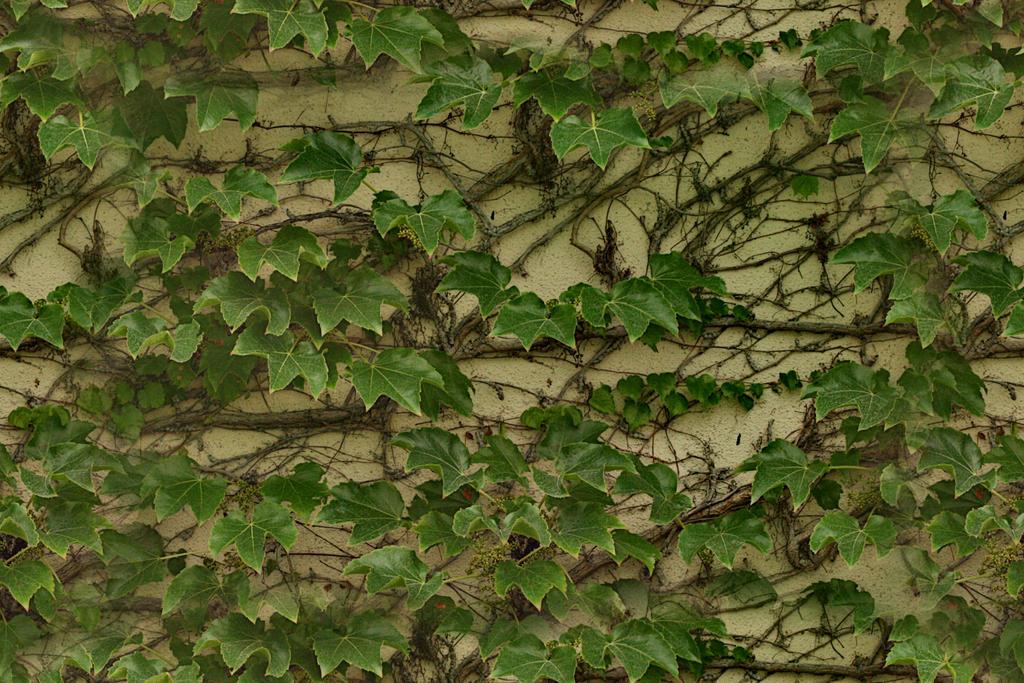 My M3D maps : Seamless ivy 2 pattern
