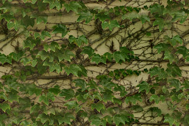 My M3D maps : Seamless ivy 2 pattern by PhotoComix2