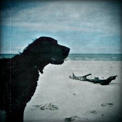 .old dog and the sea.
