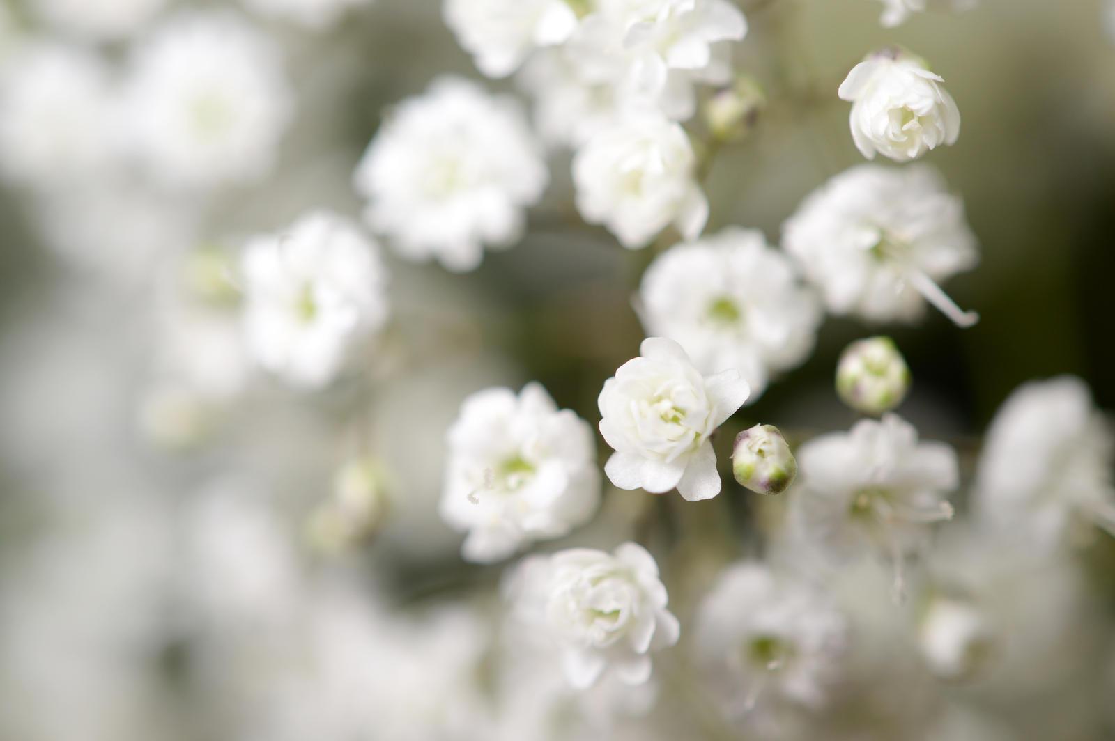 Tiny Flowers In White By Chrisahamer On Deviantart