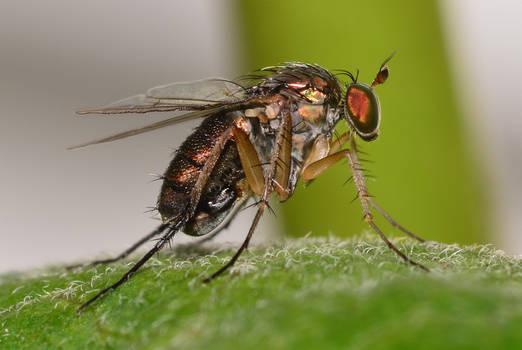 Fly169