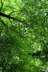Nature ceiling