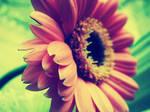 Vintage flower I