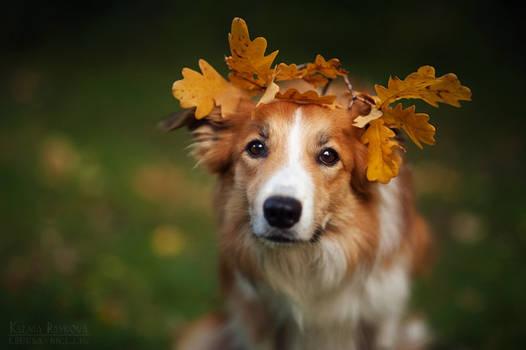 My autumn Kim