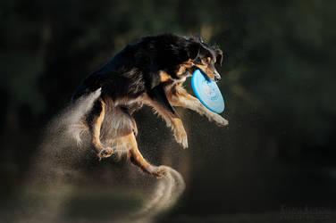 Dog frisbee by Ksuksa-Raykova