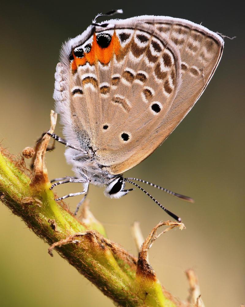 Moth by HeyNay