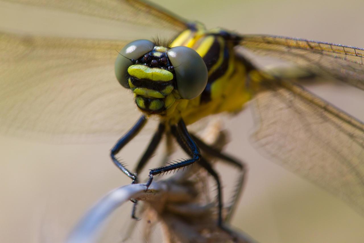 Dragonfly by HeyNay