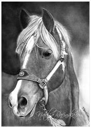 Horse Tex by NataliaRafinska