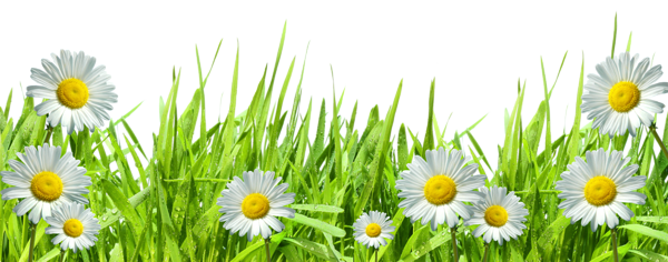 Grass with Flowers PNG
