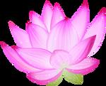Pink Lotus PNG