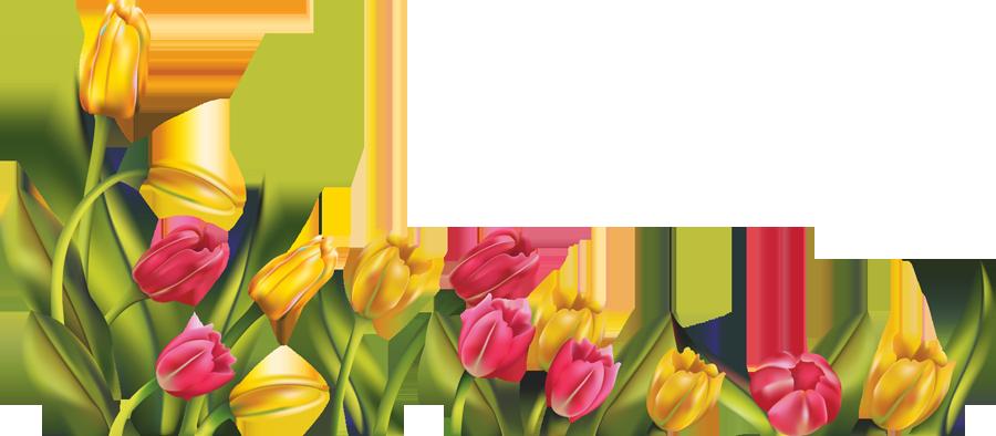 [RES] Tulip Border PNG by HanaBell1 on DeviantArtTulips Clipart Border