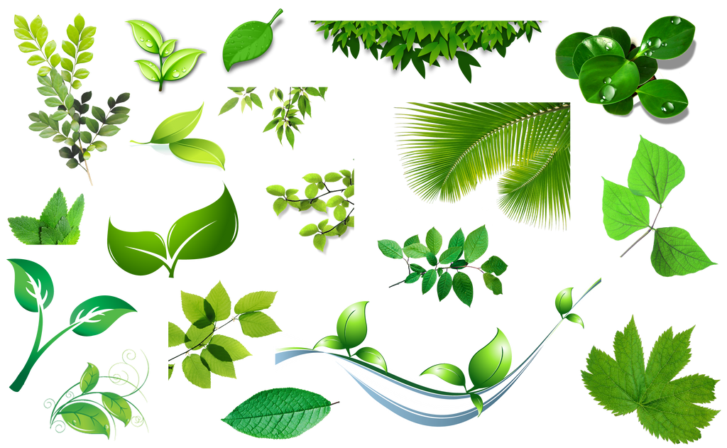 Res Set Of Leaves Png By Hanabell1 On Deviantart