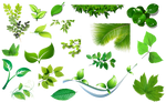 [Res] Set of Leaves PNG
