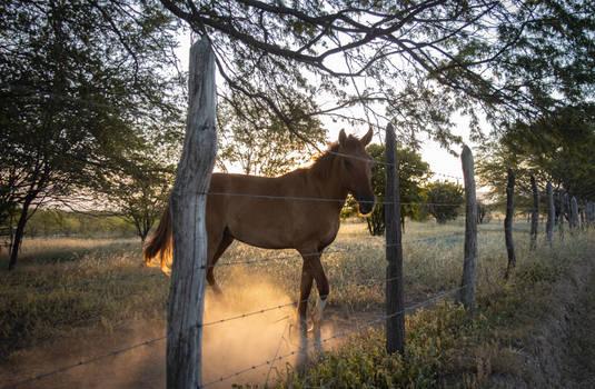 Cavalo em Jacobina