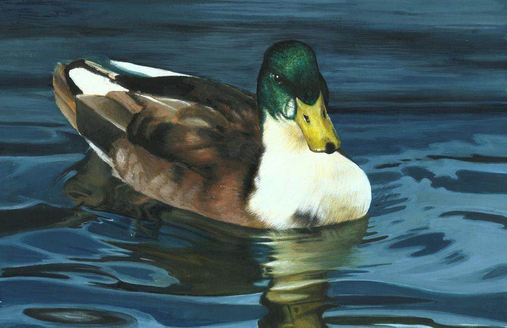 DUCK ON THE WATER by AlexanderLevett on DeviantArt