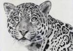 Jaguar by Baricka