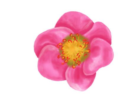 Strawberry Blossom in Pink by RhodyGunn