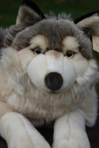 Huskyplush's Profile Picture