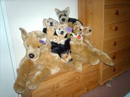 My older plush German Shepherds by Huskyplush