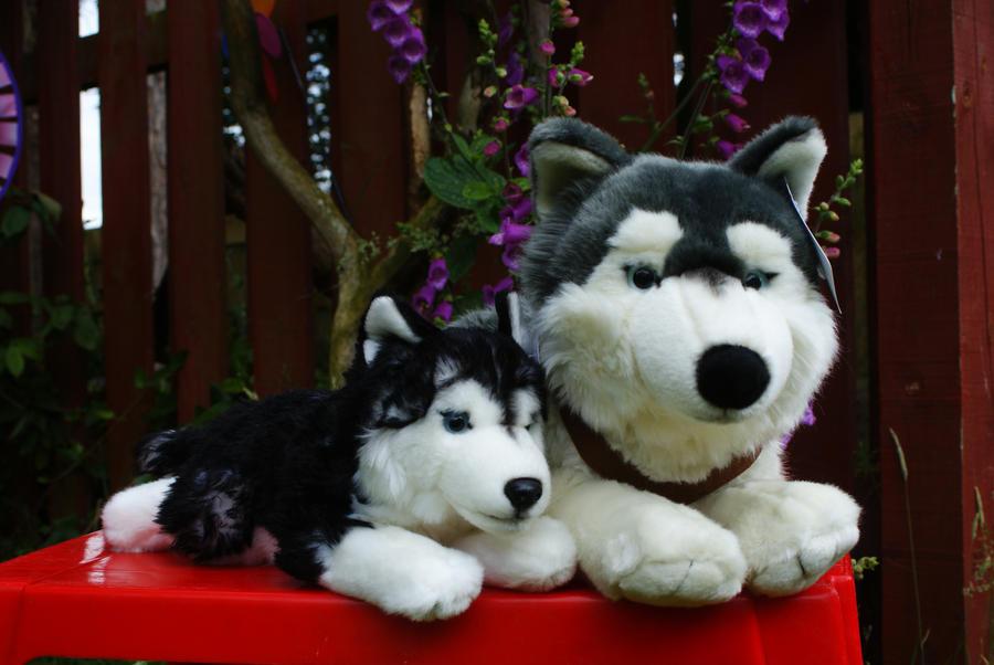 Black Husky Plush Related Keywords Suggestions Black Husky Plush
