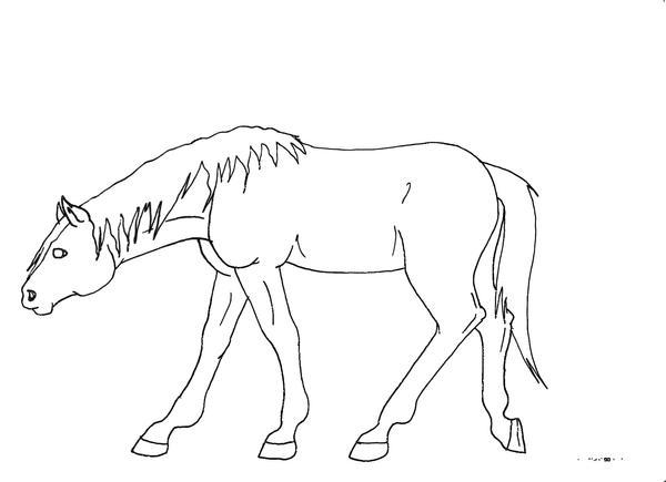 Walking Horse Outline: Outline Horse Walking By Nestea90 On DeviantArt
