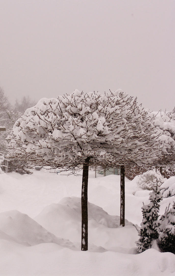 SnowBalls by allinside