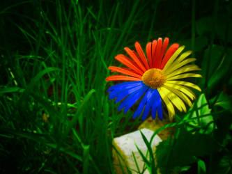 Romanian Flower