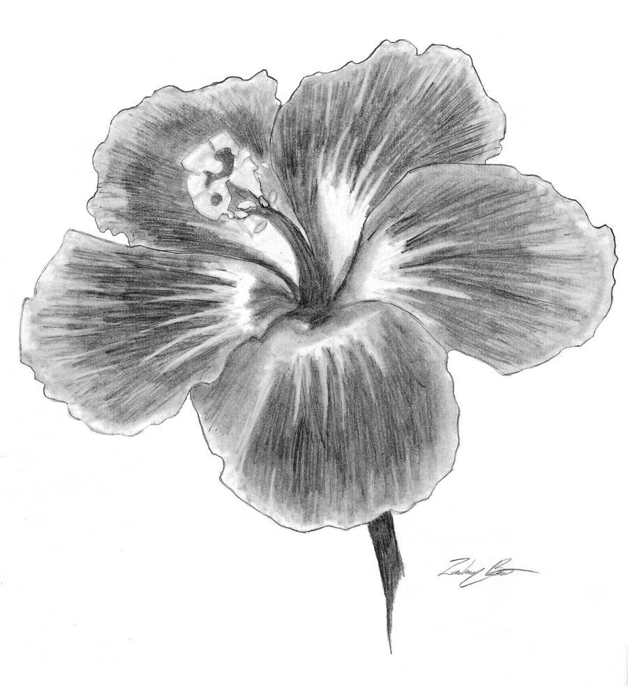 Multiple Flower Drawings Hibiscus Flower Drawings